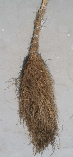 feathery cypress broom, tied with twine